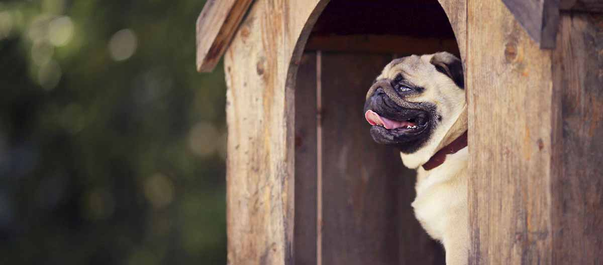 comparatif niche pour chien