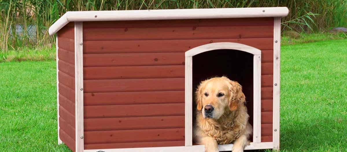 test niche pour chien