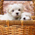 Conseils pour bien choisir votre panier pour chien