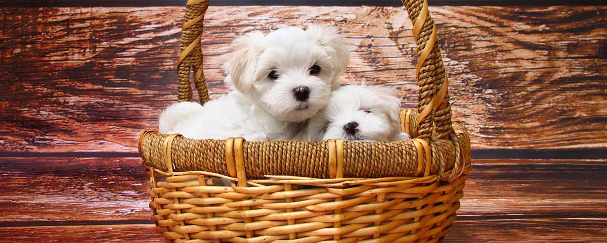 5956b2697c2d cherrydog.fr - Page 11 sur 11 - Comparatif et guide d achat des ...