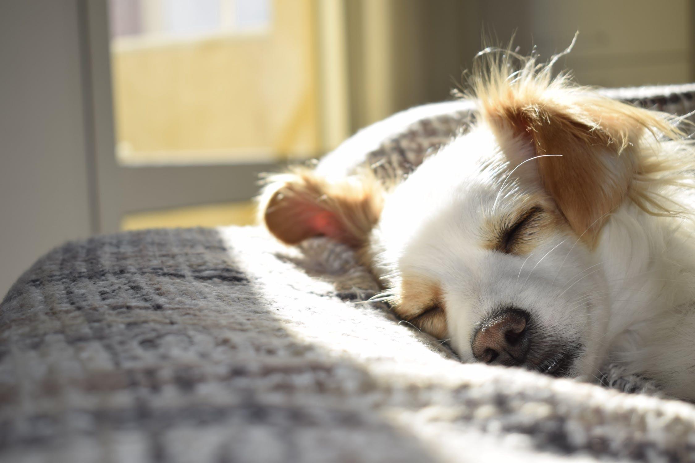 taille idéale d'un panier pour chien