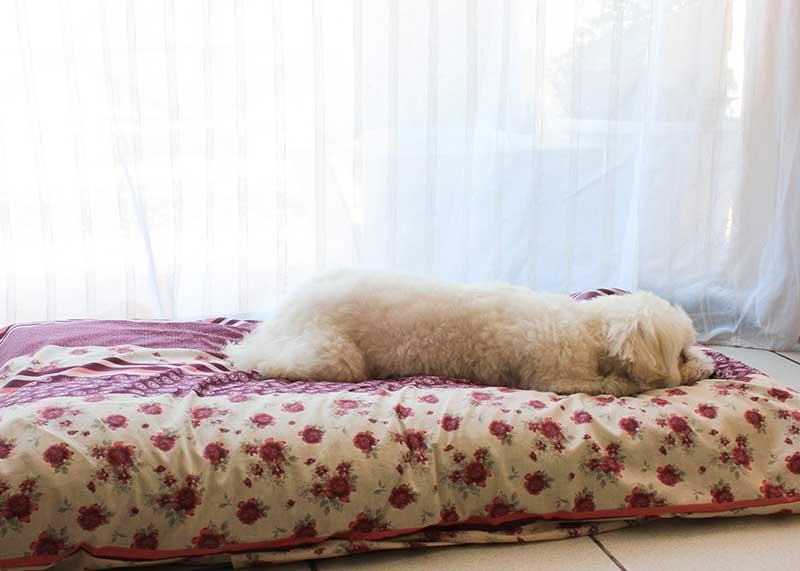 achat tapis pour chien