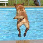 apprendre à son chien à nager