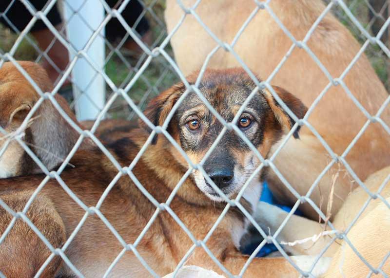 avis cage de transport pour chien