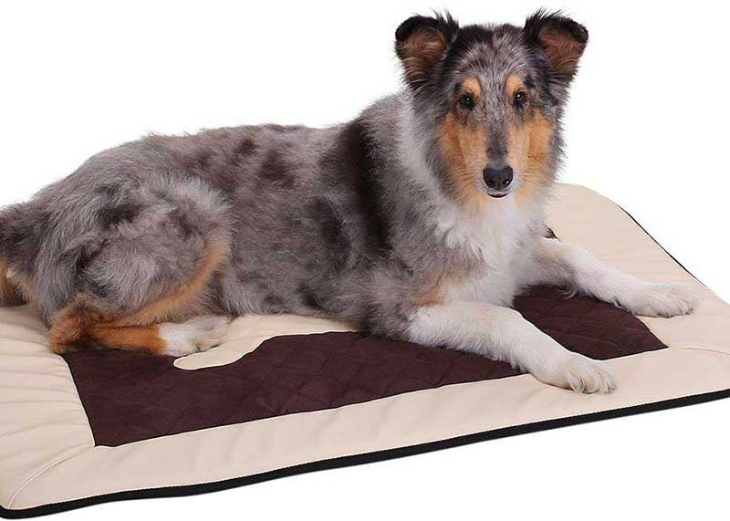avis tapis pour chien