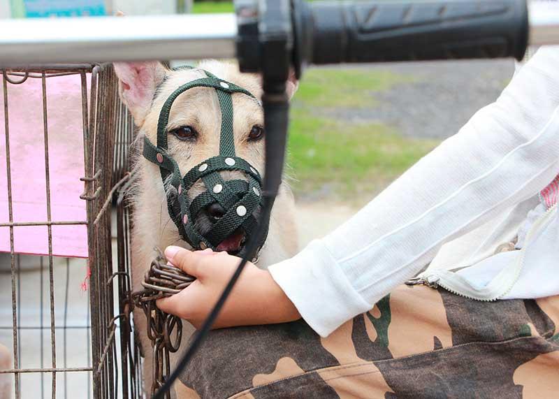 cage de transport pour chien pas cher
