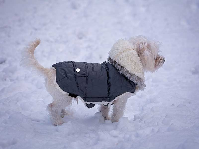 comment choisir la taille d 39 un manteau pour chien. Black Bedroom Furniture Sets. Home Design Ideas