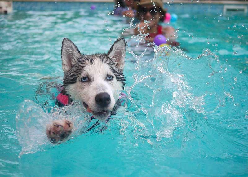 comparatif piscine pour cien