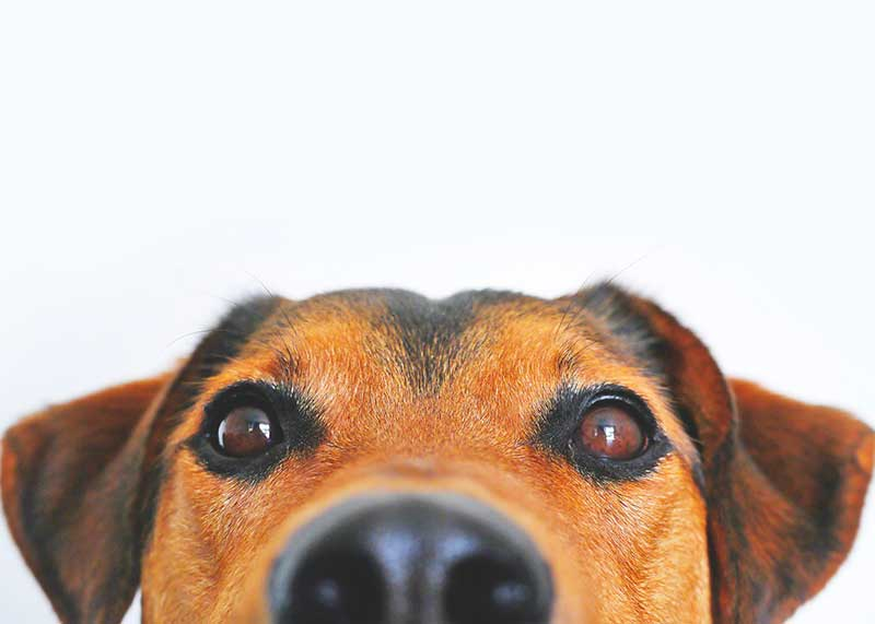 comparatif poussette pour chien