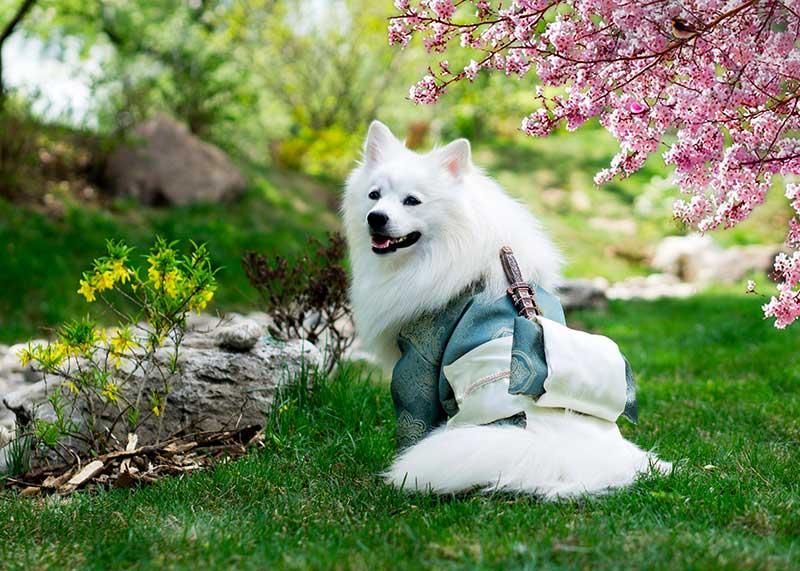 meilleure poussette pour chien