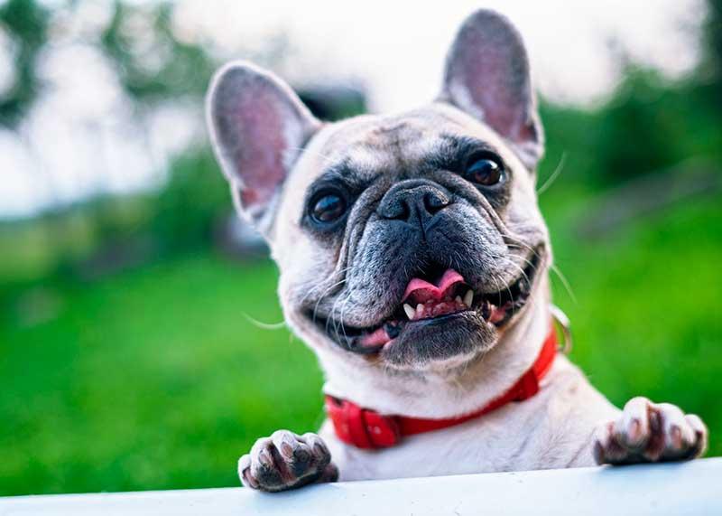 poussette pour chien pas cher