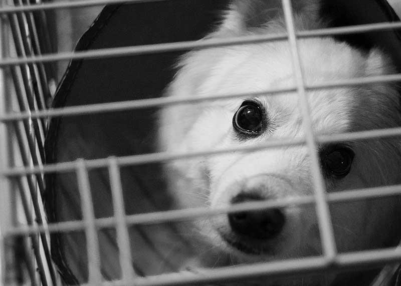 prix cage de transport pour chien
