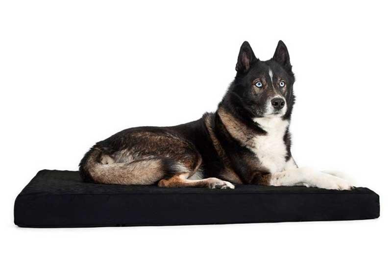 tapis pour chien prix