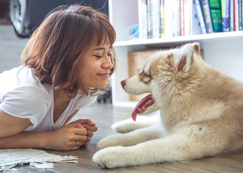 test poussette pour chien