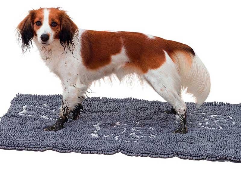 test tapis pour chien