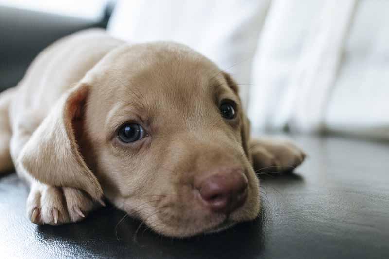 achat canape pour chien