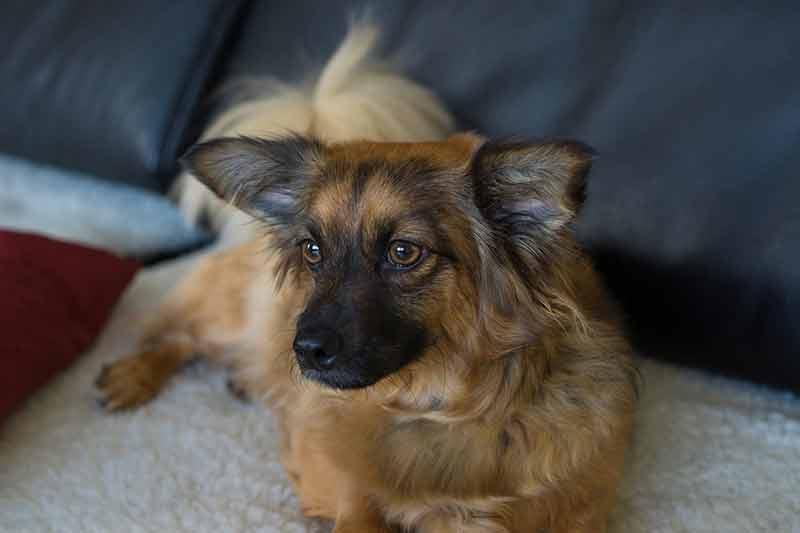 achat couche pour chien