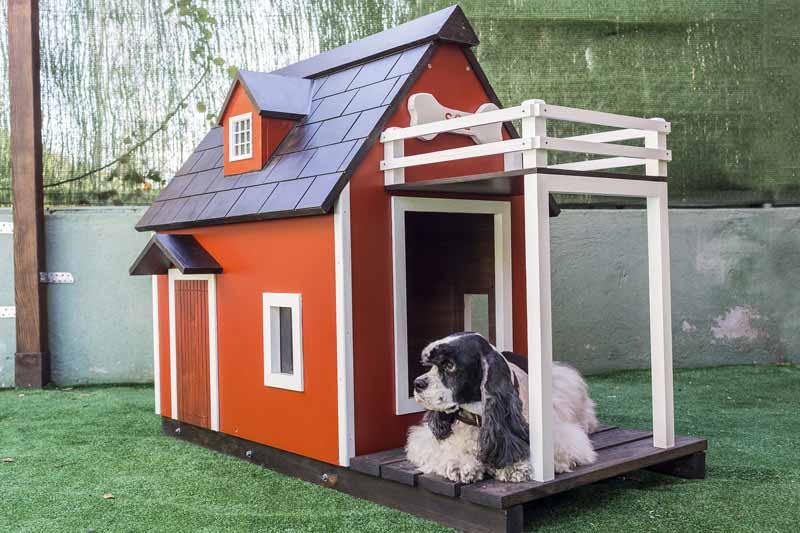 achat enclos pour chien
