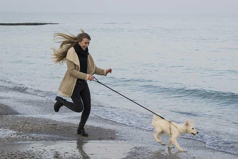 achat laisse corde pour chien