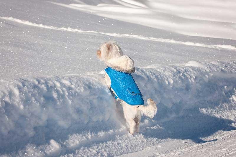 achat manteau pour chien