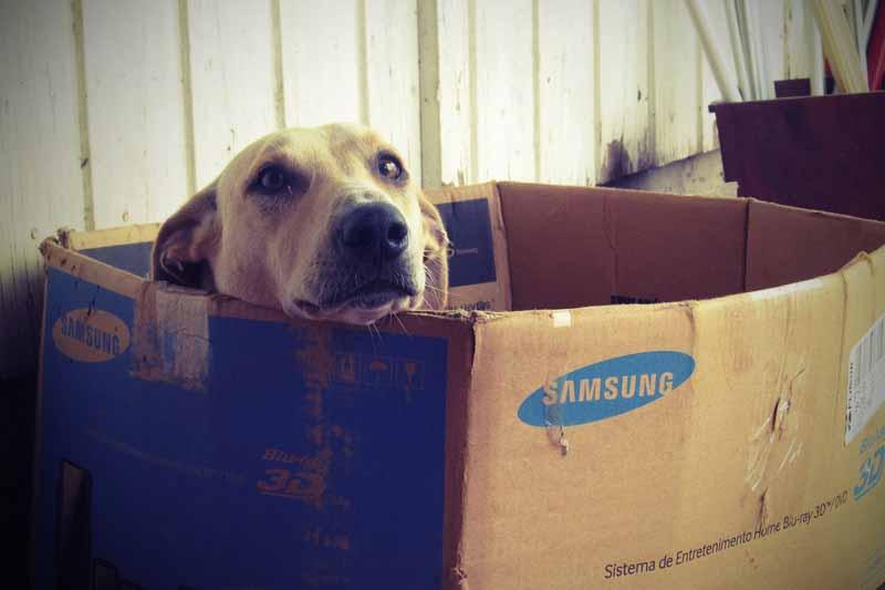 achat niche pour gros chien