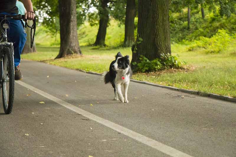 achat remorque velo pour chien