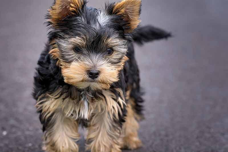 achat tondeuse pour chien