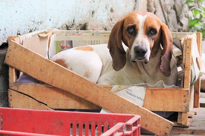 avis cage pour chien