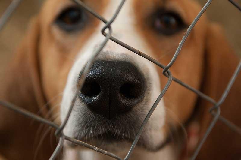 avis chenil pour chien