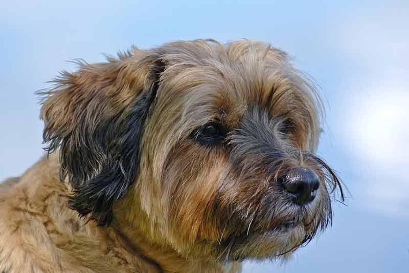 avis tondeuse pour chien