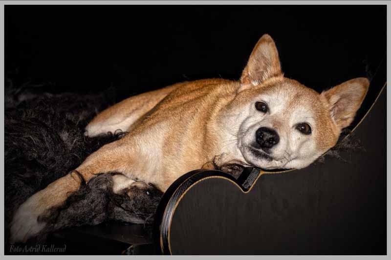 canape pour chien pas cher