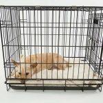 chien cage peur