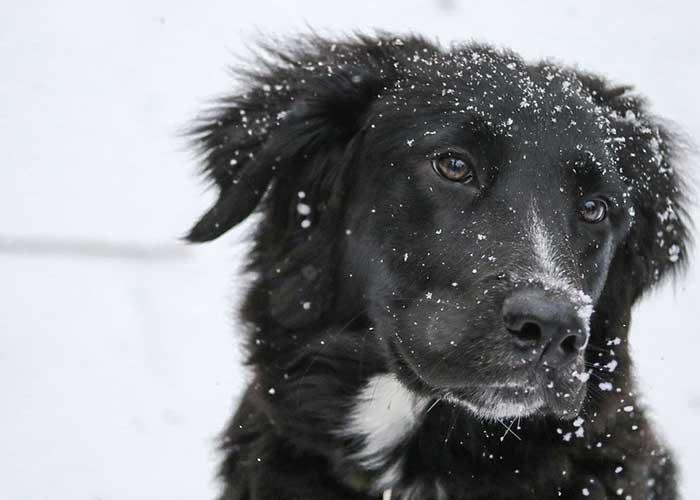 Votre chien est-il prêt pour l'hiver ?