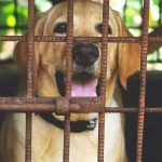 chien temps maximum en cage