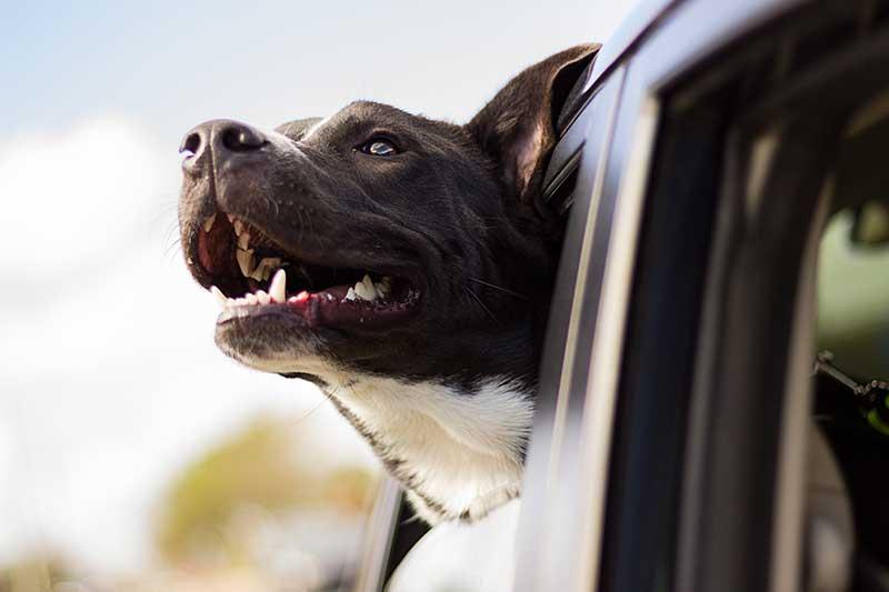 Comment nettoyer une housse de siège auto pour chien ?
