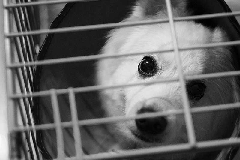 comparatif cage pour chien