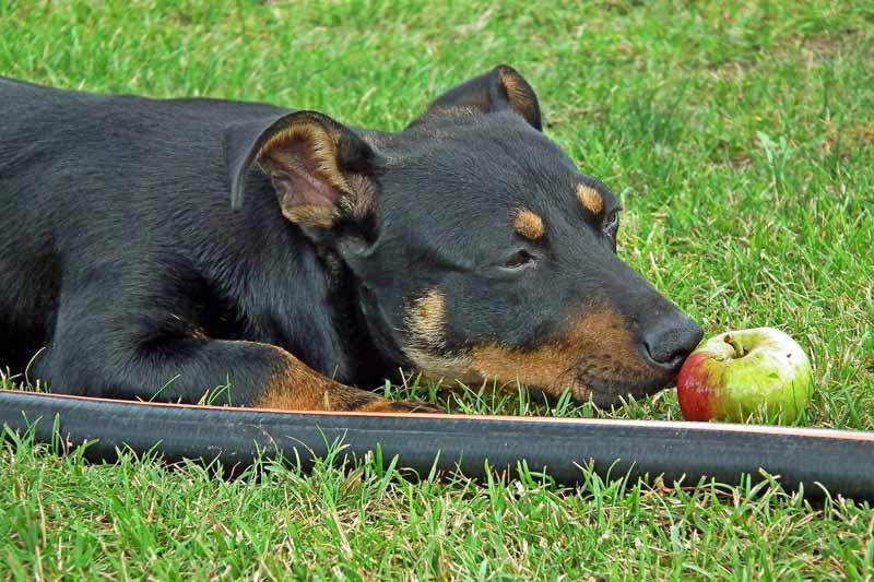 comparatif cloture electrique chien