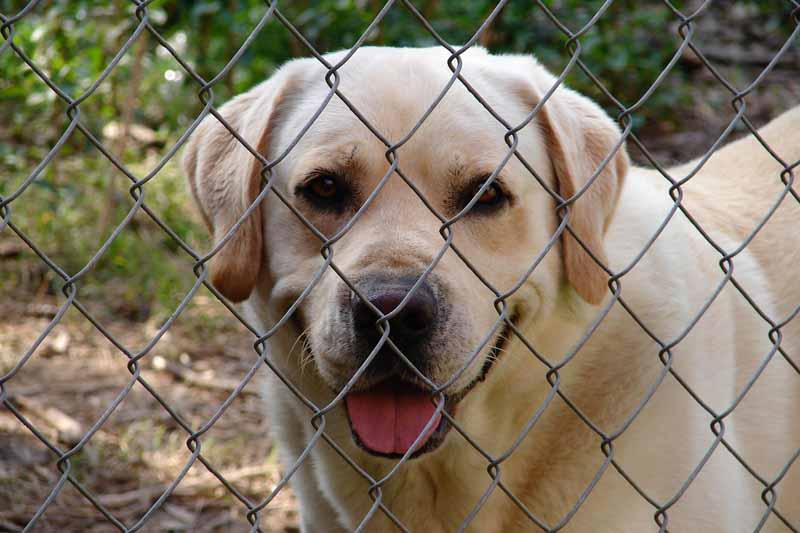 comparatif enclos pour chien