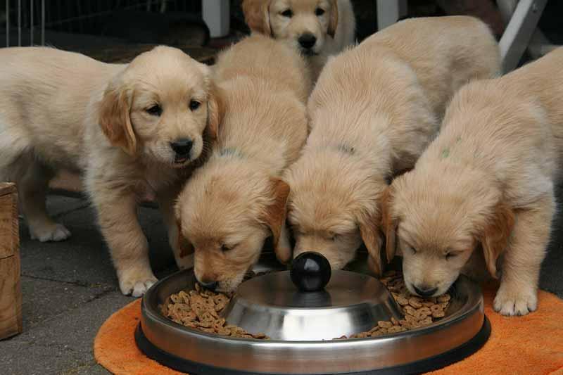 comparatif gamelle pour chien