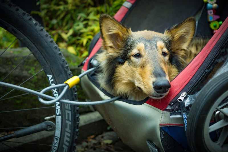 Doggyhut ® XXL Remorque pour chien avec Jogger Remorque à vélo Remorque à vélo pour chien