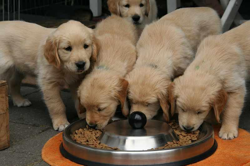 croquette pour chien pas cher