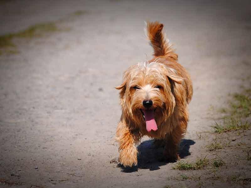 Les dangers du coup de chaleur chez le chien