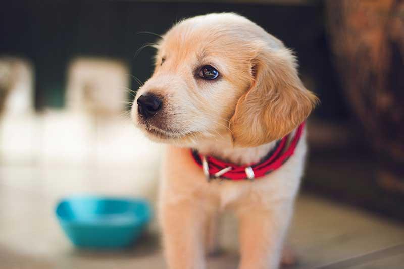gamelle pour chien pas cher