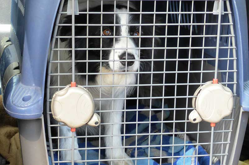 Comment habituer son chien à la cage pour chien ?