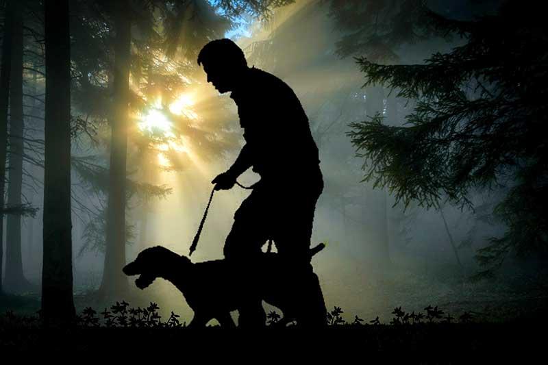 Comment habituer son chien à la laisse ?