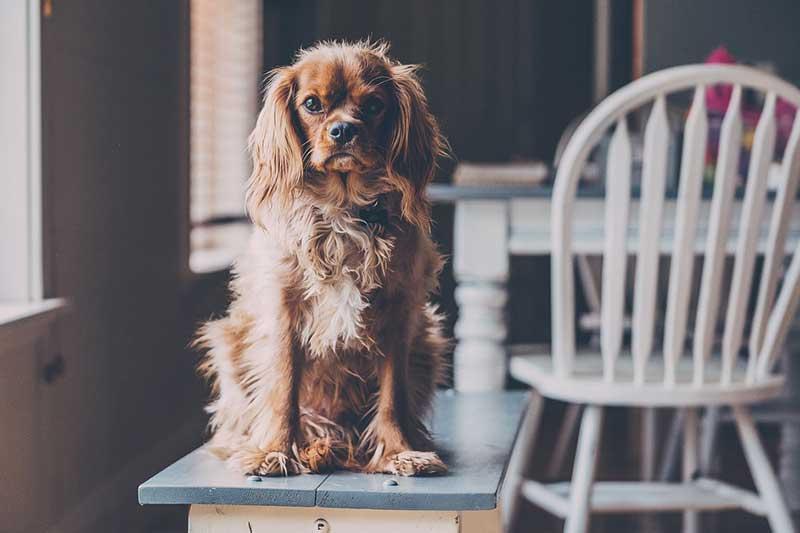 meilleure gamelle pour chien