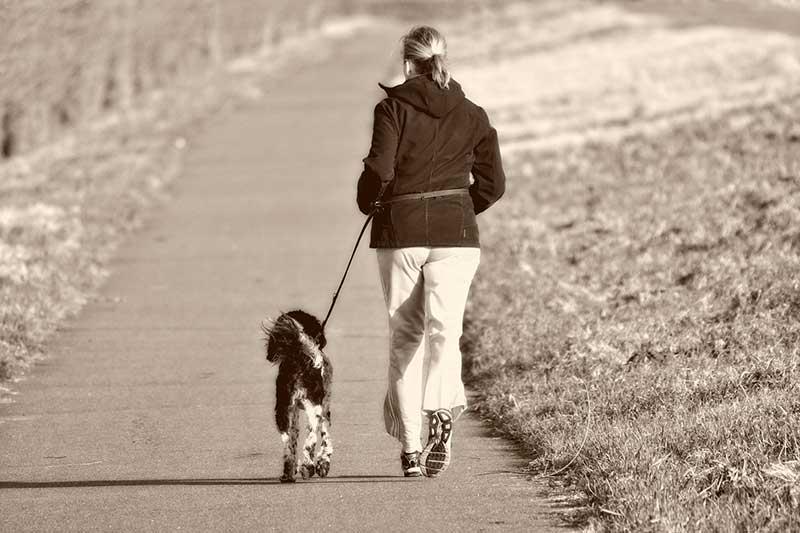 meilleure laisse corde pour chien