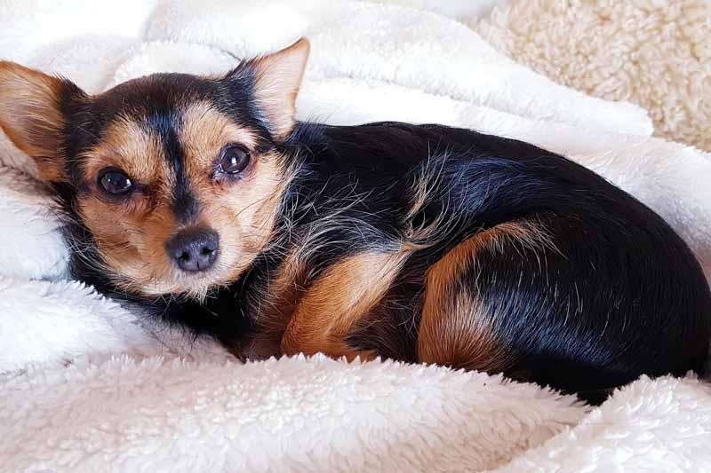 prix canape pour chien