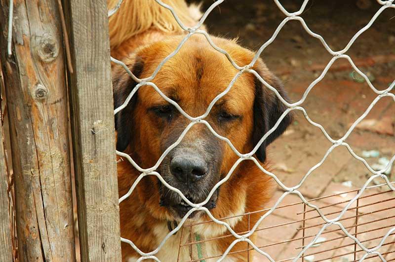 prix chenil pour chien