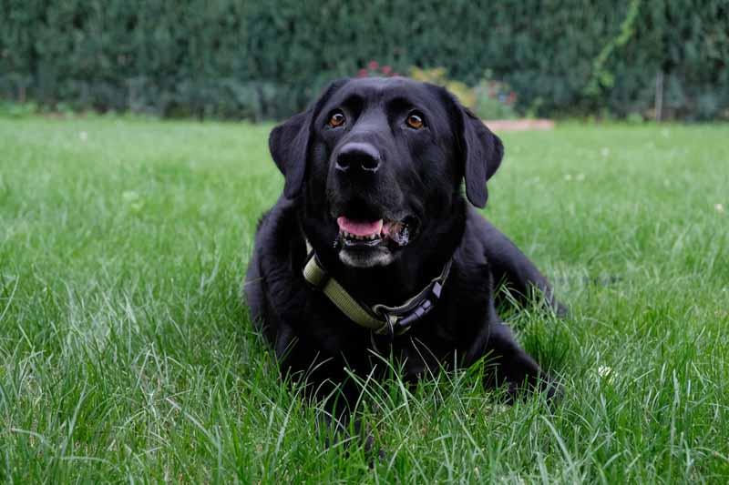 prix cloture electrique chien